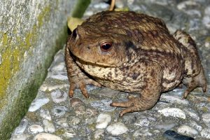 toad-405121_960_720