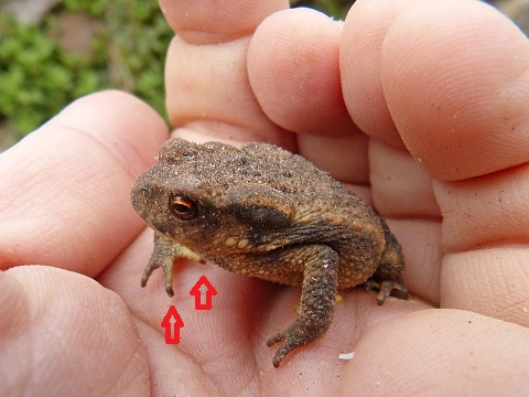 toad-3374696_960_720