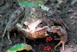 toad-459033_960_720